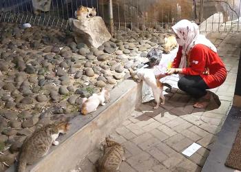 Banyak kucing terlantar yang sering diselamatkan oleh Shinta Suci sejak dulu